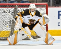 Zachary Roy of the Hamilton Bulldogs (OHL Images)